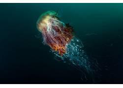 性质,水下,海,动物,鱼,海蜇,深海,竞赛,优胜者,摄影433986