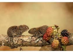 性质,水果,科,动物558077