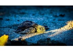嘛? Leyvraz,500px的,龟,小动物,砂,蓝色,动物566602