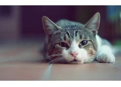猫,动物,景深592153