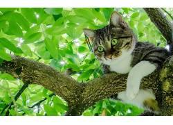 猫,动物,树木,绿眼睛,树叶474591