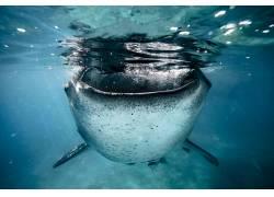 性质,海,水下,动物,蓝色676152
