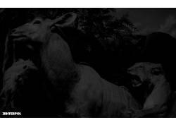 国际刑警组织,极简主义,单色,动物668676
