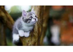 猫,动物,树木590028