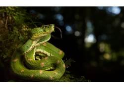 爬行动物,蛇,动物616974