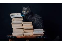 图书,猫,动物549587