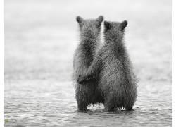性质,熊,友谊,小动物,单色,国家地理538775