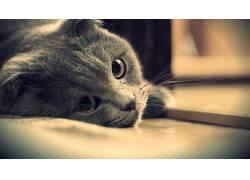 猫,动物,特写,乌贼397194
