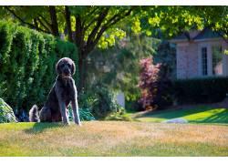 草坪,狗,动物636586