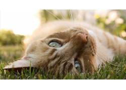 猫,动物,特写,性质,草,景深527395