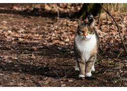 在户外,动物,猫497155