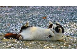 在户外,动物,猫497156