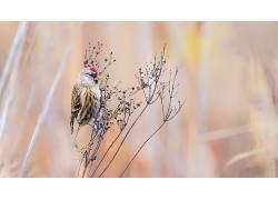 鸟类,动物,性质,植物597023