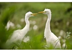 鸟类,动物,性质573218