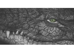 爬行动物,鳄鱼,选择性着色,獠牙,绿眼睛424938