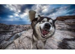 在户外,狗,面对,动物493908