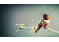 鸟类,动物,数字艺术,科387618