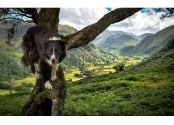 性质,狗,动物,边境牧羊犬620477