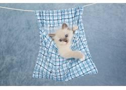 蓝色,小动物,猫,动物548555
