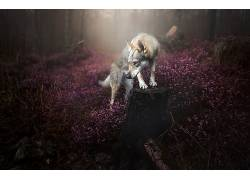 性质,狗,动物536268