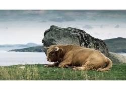 牛角,性质,动物,河,草,石,岩,公牛501956