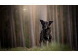 性质,狗,动物552135