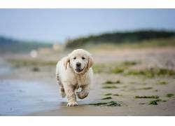 性质,狗,动物554120