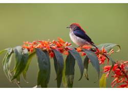 鸟类,动物,植物455834