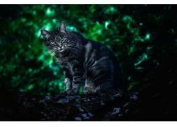 猫,动物,看着观众,景深,树木632424