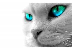 猫,动物,眼睛,蓝眼睛397872