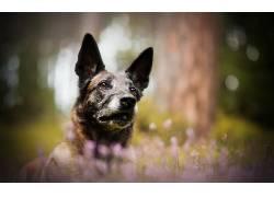 性质,狗,动物554788