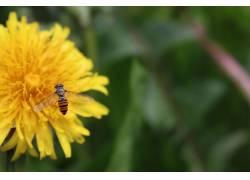 夏季,性质,花卉,昆虫,动物383578