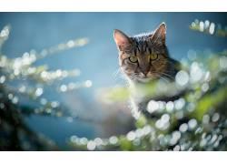 蓝色,植物,动物,猫676161