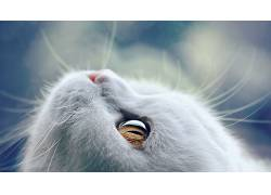 猫,动物,眼睛447909