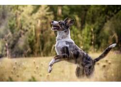 性质,狗,动物555793