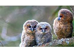 鸟类,动物,猫头鹰563855