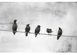 鸟类,动物,白色,线589999