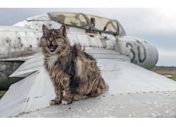 猫,动物,破坏,飞机493493