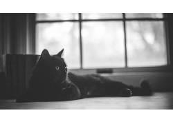 猫,动物,窗口,单色382794