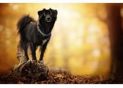 性质,狗,动物588846