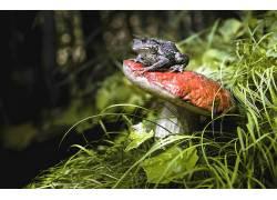 蘑菇,植物,青蛙,动物542625