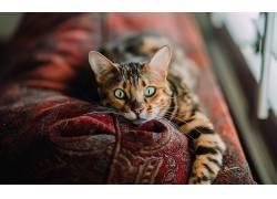 猫,动物,绿眼睛,景深,看着观众625891
