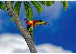 鸟类,动物,鹦鹉,植物,吸蜜373669
