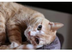 猫,动物,绿眼睛,猫眼,晶须686591
