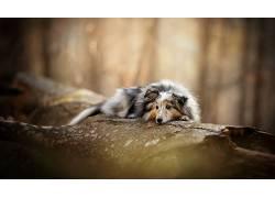 性质,狗,动物598318