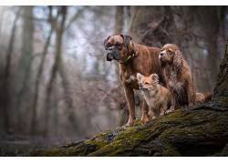 性质,狗,动物598764