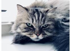 猫,动物,绿眼睛,猫眼,晶须692560