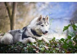 性质,狗,动物624035