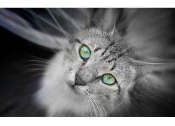 猫,动物,绿眼睛,眼睛,景深613405