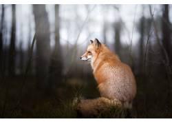 狐狸,动物,野生动物,性质494127
